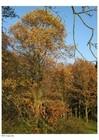 fr-images-coloriages-colorier-photo-automne-dans-un-bois-s8354.jpg