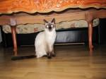 chat, vétérinaire